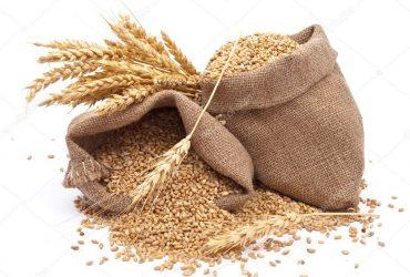 Продавам фуражна пшеница 19 т