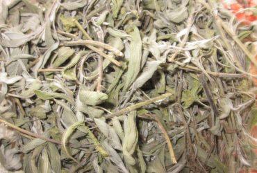 Лична: Градински чай (салвия), Salvia officinalis