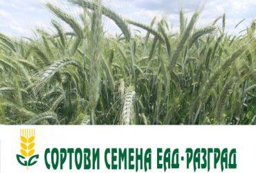 Семена полски култури